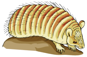 harry-the-armadillo